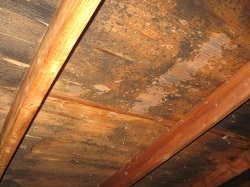Discoloured roof sheathing